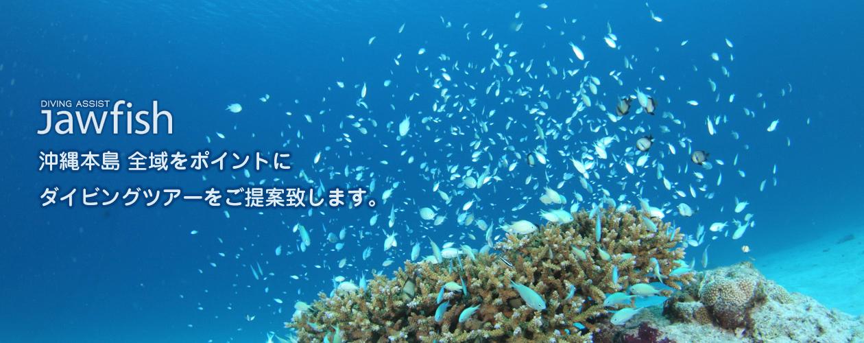 沖縄本島 全域をポイントにダイビングツアーをご提案いたします。